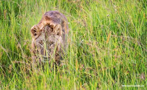 Kenia - Masai Mara 58