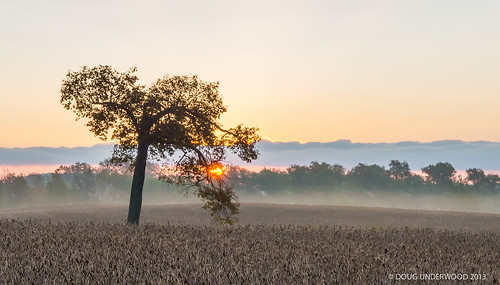 ontario canada tree fog landscape around kingcity goldenhour