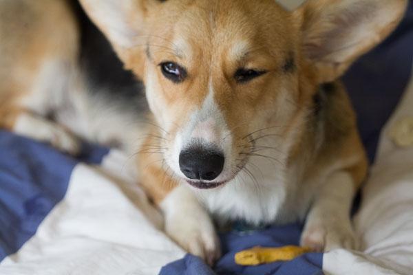 Grain-Free Pumpkin Dog Treats
