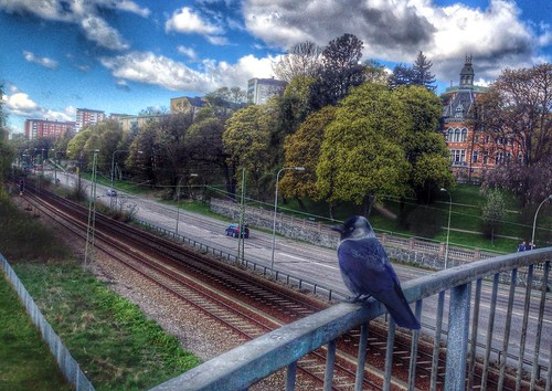 Crow - Project 365 / 121