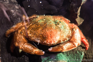 I'm feeling a bit crabby today