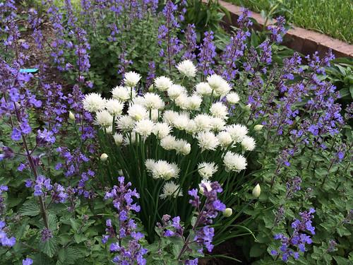 Kansas City Botanical Gardens >> A Sweet Spring Powell Gardens Kansas City S Botanical
