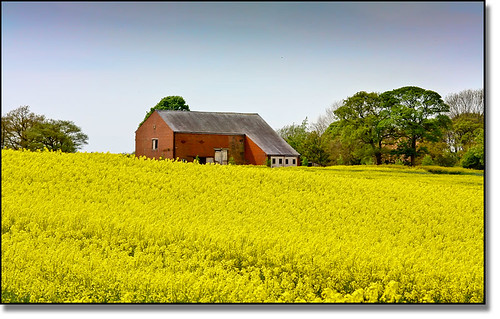 flowers trees sky colour building barn farmland crop bloom rapeseed