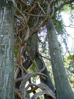 Paseo del Bosque