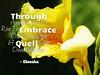 193_Through_Appreciation_AR_172_pg125_600x480_Eleesha_Inspiration_Quote_Affirmation00