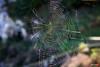 Tela de Araña / Spider's Web