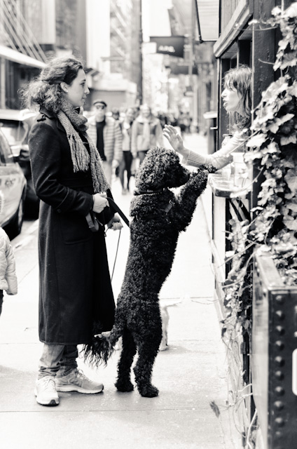 woman and dogs in the east village