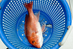 Red Snapper in Basket