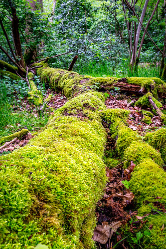 uk tree nature leaves forest moss woods nikon unitedkingdom united norfolk kingdom watton 2013 d7100 nikond7100