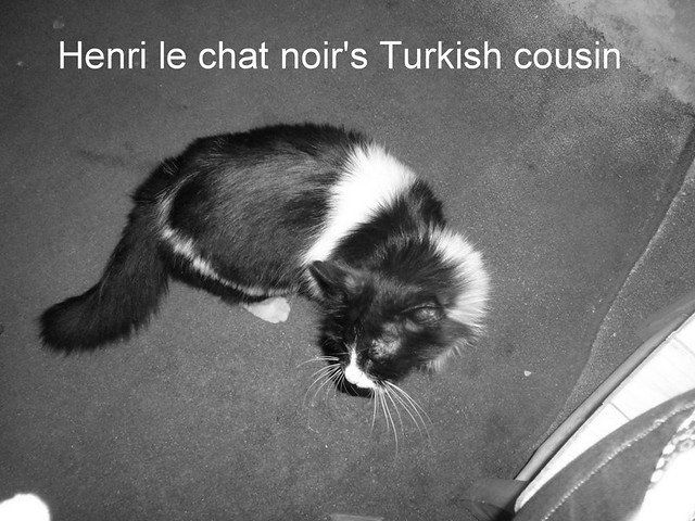 Henri le chat noir's Turkish cousin