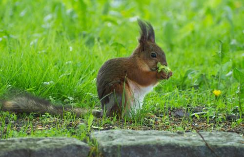 park food green nature spring squirrel zoom wildlife pvanhala