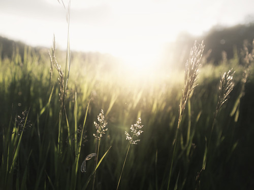 sunset sun macro green nature grass landscape wheat manofsteel nicholasyee nicholasdyee