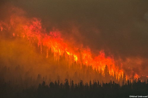 trees green fire colorado wind flames wildfire westforkcomplexfire papoosefire