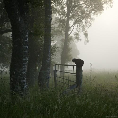 uk sun mist sunrise landscape scotland europe grantownonspey afszoomnikkor2470mmf28ged