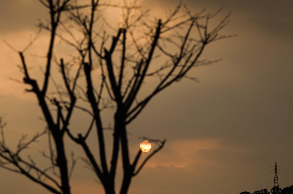 樹梢上的落日