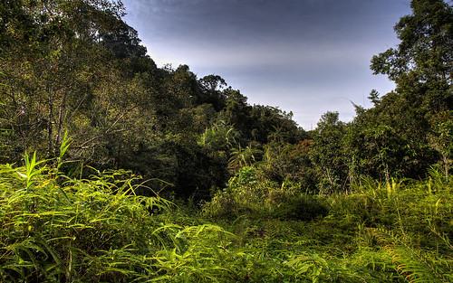 srilanka sinharaja sinharajarainforest sinharajaforestreserve weddagala