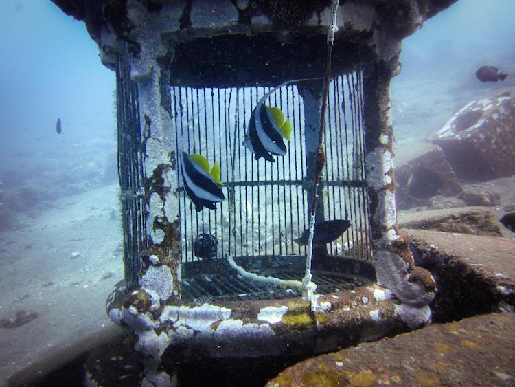 Dive 198