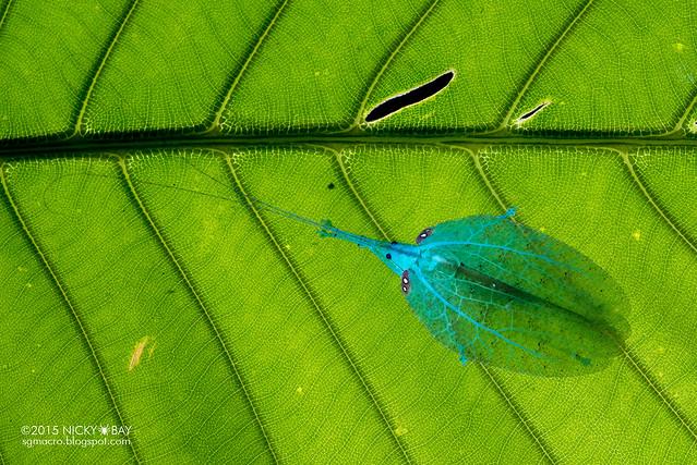 Katydid (Tettigoniidae) - DSC_9438