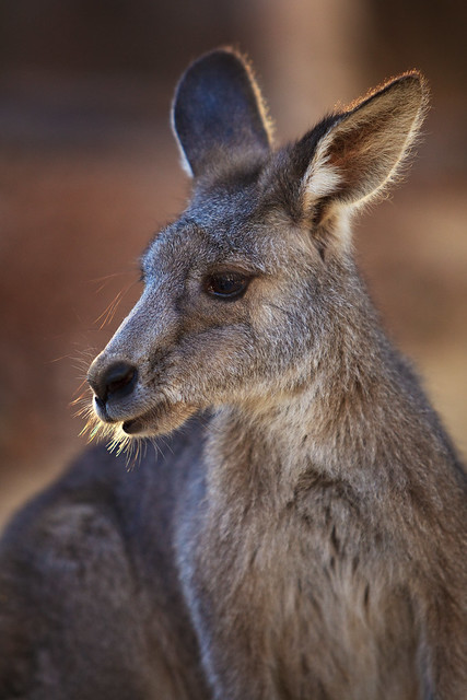 One of Skippy's Mates