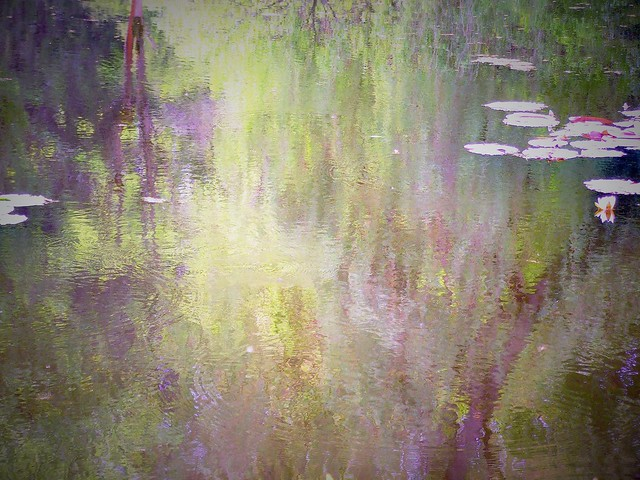 fairy pond like Monet pictures