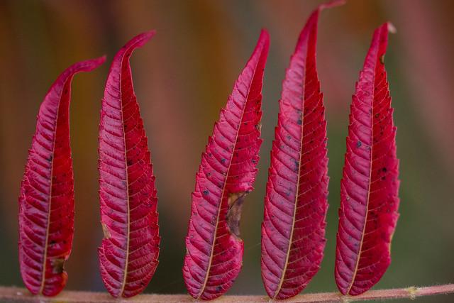 Leaves Line