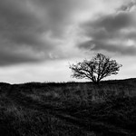 White Horse Hill Tree