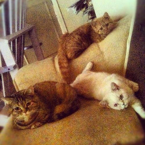 tre knäppisar, mamma, dotter, dotter <3 #kattliv