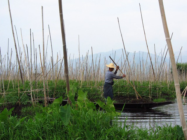 Farmer Working in Floating Garden