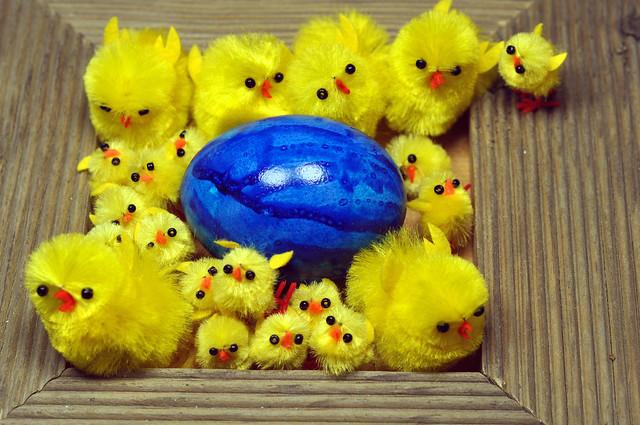 Keine Eier aus Massentierhaltung !