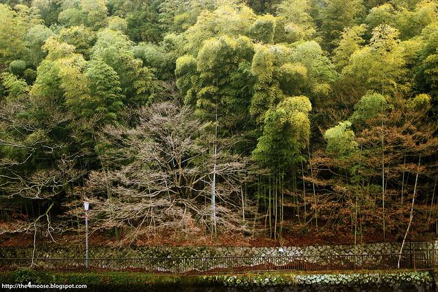 Uji - Bamboo Grove