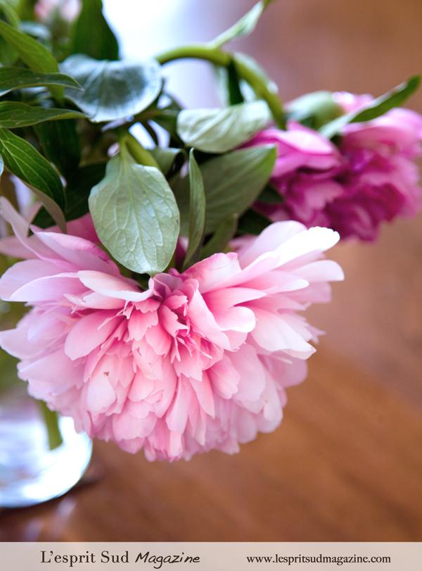 Pink peonies - {Pivoines}