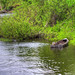 Barnaby River