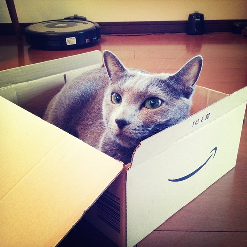 サム猫はアマゾンの箱が大好き / Sam the cat always love to get in the Amazon box