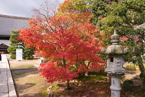 【写真】2012 紅葉 : 光明寺/2020-11-11/IMGP6495