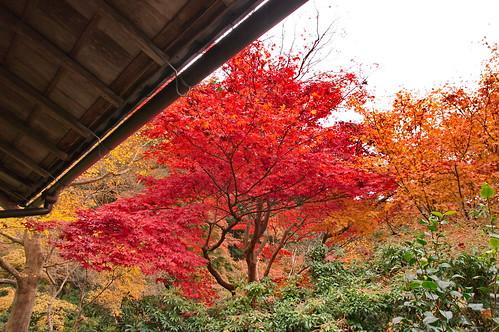 【写真】2012 紅葉 : 瑠璃光院/2020-06-07/IMGP7692