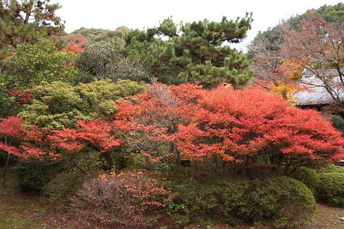 【写真】2012 紅葉 : 醍醐寺/2020-08-07/IMGP6850