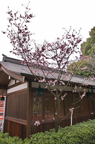 【写真】2013 桜 : 車折神社/2019-09-15/IMGP8789
