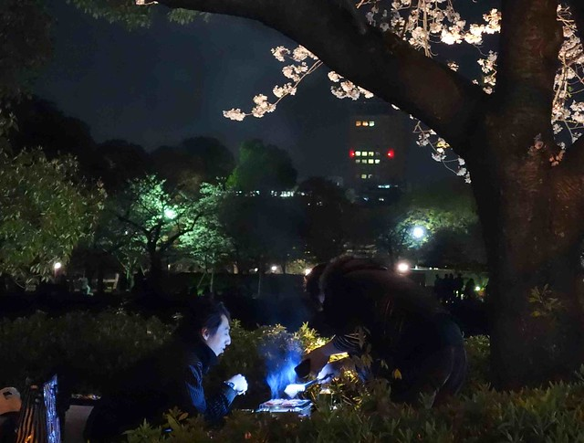 Dining under the cherry blossoms