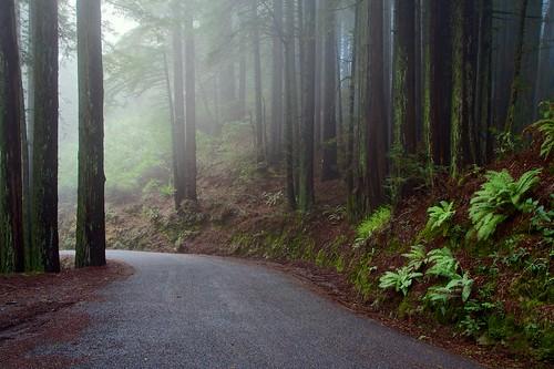 california statepark tree fog forest landscape mttam redwood tamalpais bolinasridge mttamalpaisstatepark ridgecrestblvd