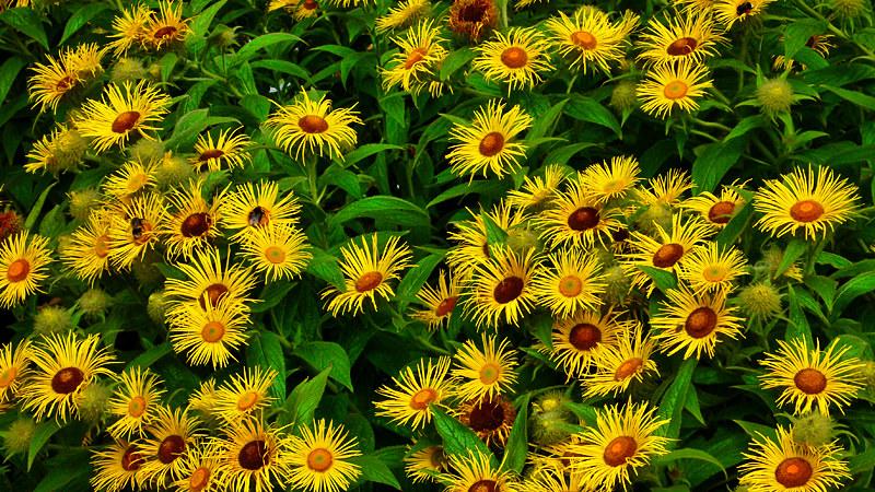 Seasonal Flora