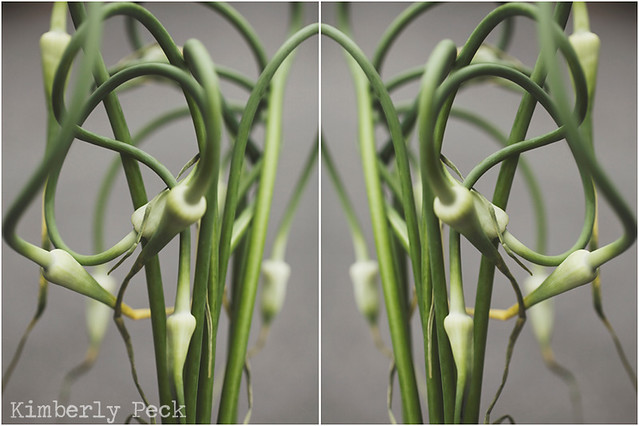 garlic scape double WEB