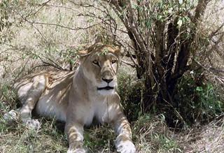 Kenia2002-11-05