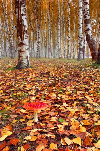 Autumn Forest by -yury-