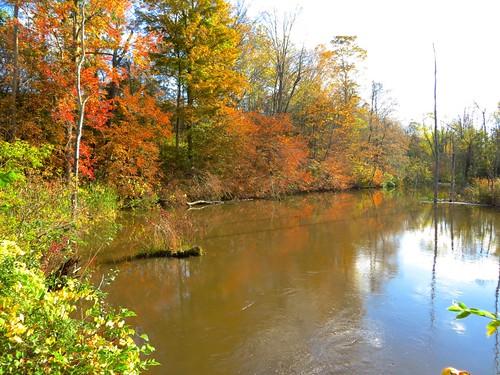 fallfoliage wetlands onondagany southonondaga