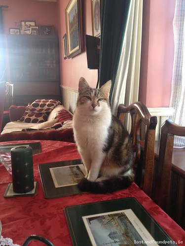 Thu, Oct 10th, 2013 Lost Male Cat - Ardcath, Porterstown, Meath