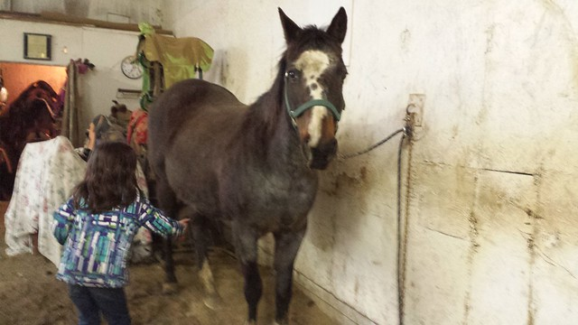Mimi's new horse Diamond