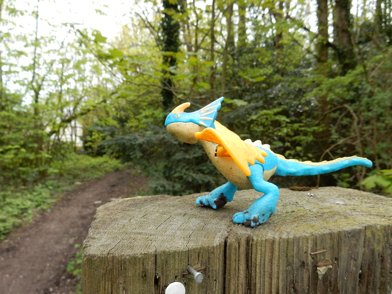 Unidentified reptile Whyteleafe to Woldingham