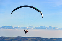 Paragliders between the Mont d'Or and the Suchet, in front of the Alps
