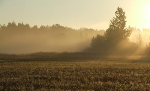 lithuania anykščiaidistrictmunicipality viešintoseldership anykščiųrajonosavivaldybė viešintųseniūnija panoramio