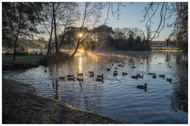 Morning Ducks!